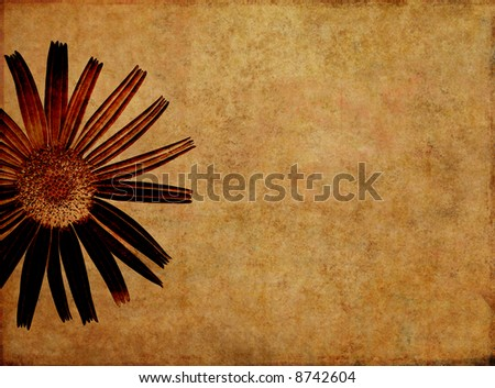 lovely brown background image with interesting texture, floral elements and plenty of space for text - stock photo