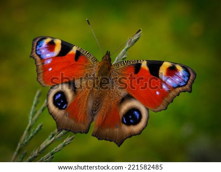 lovely butterfly (inachis io) on the green background - stock photo