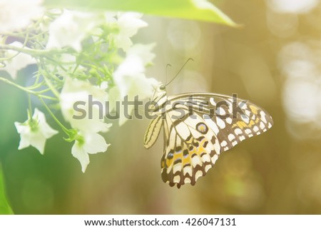 Lovely butterfly on white flowers with colorful filter. nature wildlife insects.  - stock photo