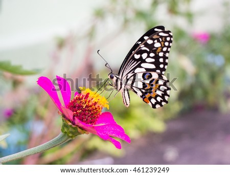 Lovely butterfly sucking nectar from pink flower