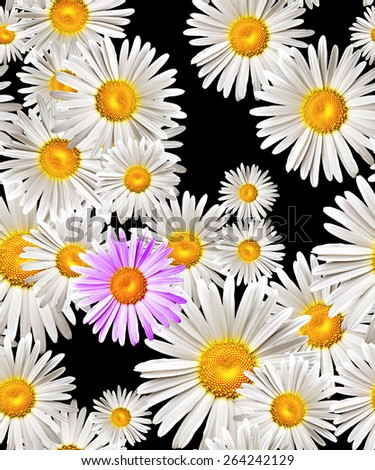 lovely camomiles (seamless pattern) - stock photo