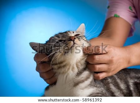 Lovely cat - stock photo