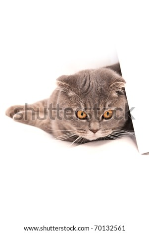 lovely cat banner isolated on white - stock photo