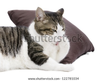 Lovely cat cleaning itself on white isolated background