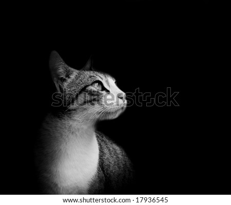 Lovely cat in black background