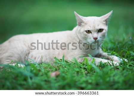 lovely cat lay on green grass in the sunshine day