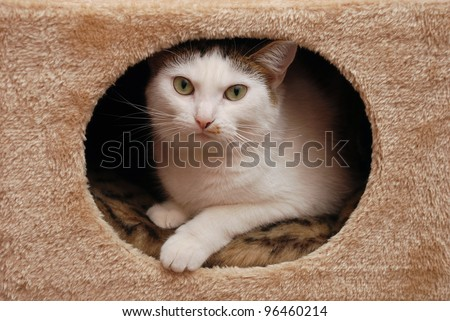 Lovely cat lying in the cat house - stock photo