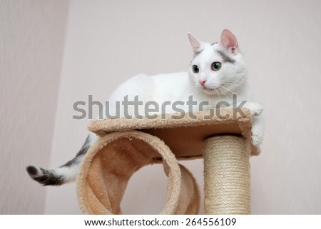 Lovely cat lying on the cat house - stock photo