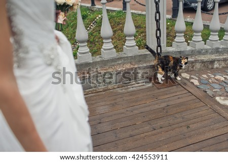 Lovely cat next to the newlyweds outside - stock photo