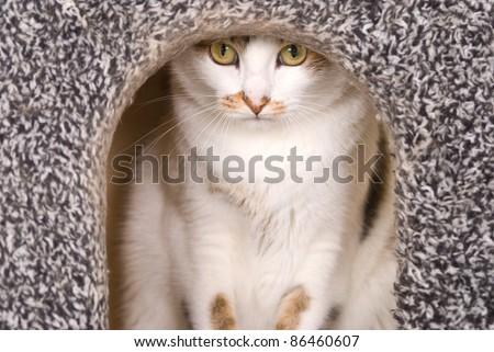 Lovely cat portrait in cat's house - stock photo