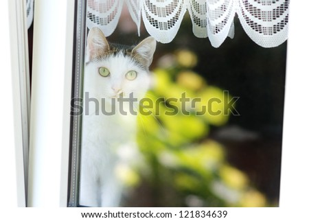Lovely cat sitting on a window sill behind a window - stock photo
