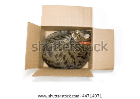 Lovely cat sleeping in the paper box. - stock photo