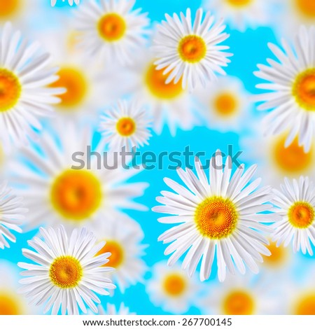 lovely chamomiles (seamless pattern) - stock photo