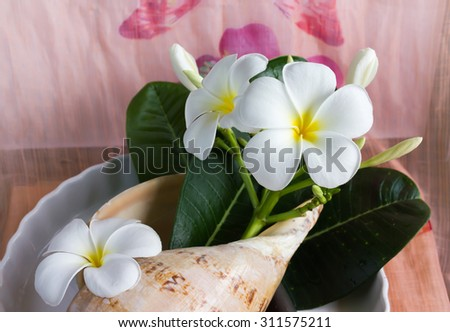 lovely charming aroma flower plumeria in boutique style decorated in conch shell - stock photo