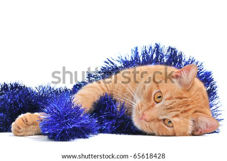 Lovely Christmas Kitten Lying on the Floor - stock photo