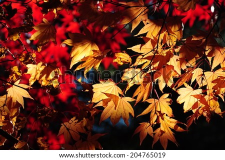 lovely colorful leaf - stock photo