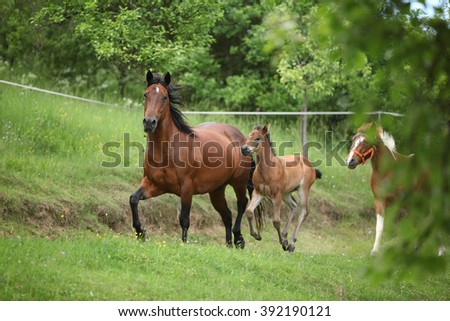 Lovely couple - mare with its foal - running togetheron pasturage - stock photo