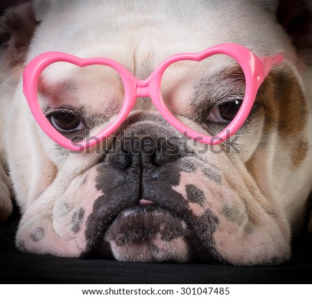 lovely dog - bulldog wearing heart shaped glasses - stock photo