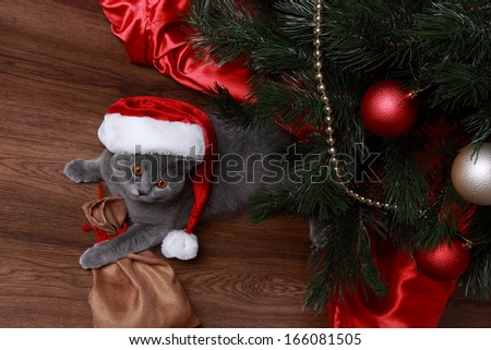Lovely domestic animal under the Christmas tree on Holiday theme/Portrait of Christmas British gray cat - stock photo