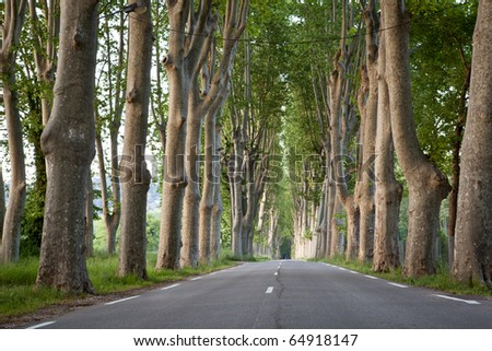 Lovely, empty country road lined with sycamore trees in Provence,  southern France - stock photo