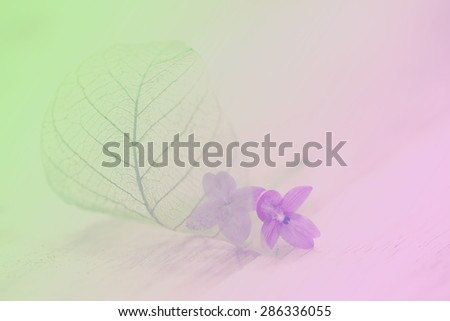 lovely flower background