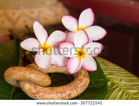 lovely fresh harmony pink flower frangipani or plumeria decorated in boutique and vintage style - stock photo
