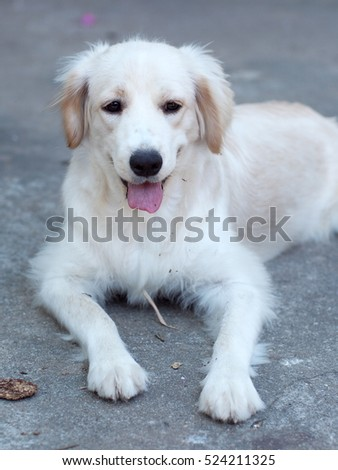 Cute Puppy Wearing Angel Wings Halo Stock Photo 130802102