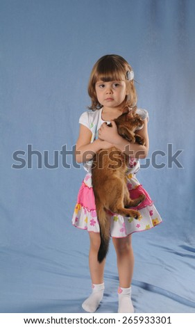 Lovely girl with kitten in hands studio portrait. She stands on blue textile background and kitten somali breed hanging in her hands. - stock photo