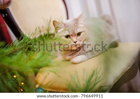 Lovely gray cat in room interior