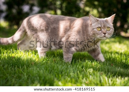 Lovely gray cat walking in spring park