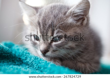 lovely gray pussy is interesting - stock photo