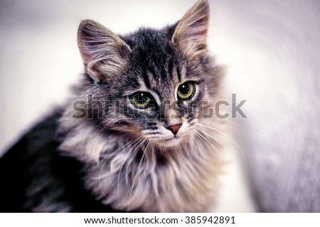 Lovely grey kitten sit on white cover - stock photo