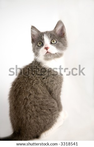 Lovely grey kitten sitting on grey background looking around