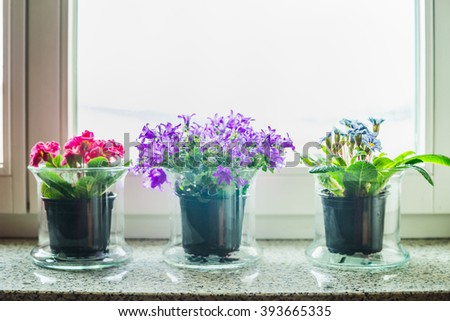 Lovely home decoration with grass flowers pots on windowsill