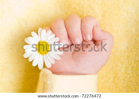 Lovely infant hand with little white daisy - stock photo