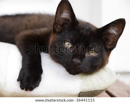 Lovely Kitten - stock photo