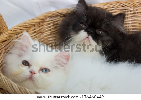 Lovely kitten in the basket
