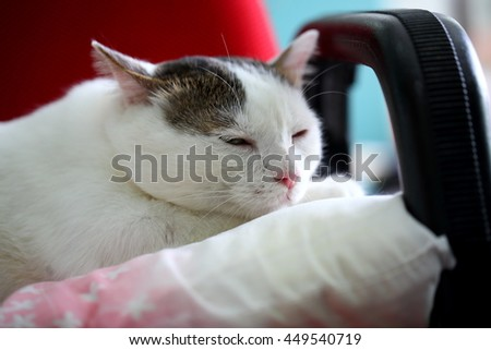 Lovely kitten sleeping on the chair.  - stock photo