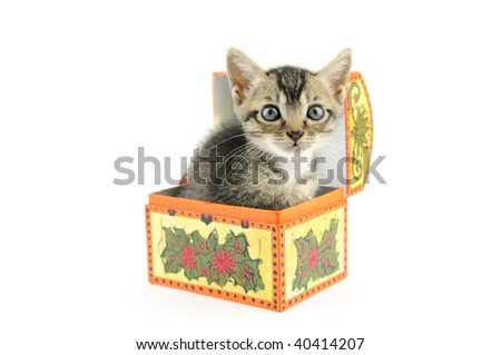 Lovely kitty in treasure box, isolated on white background