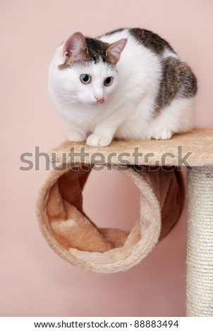 Lovely lady-cat sitting on the cat house - stock photo