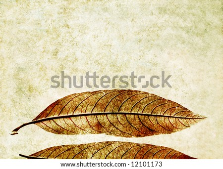 lovely light background image with interesting texture, close-up of leaves and plenty of space for text