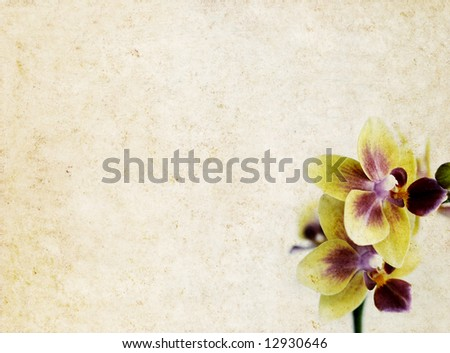 lovely light brown background image with interesting earthy texture, floral elements and plenty of space for text