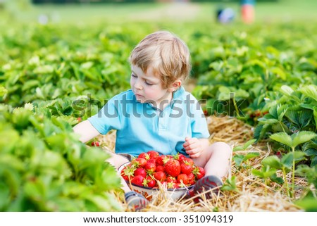 Lovely little toddler kid boy picking and eating strawberries on organic pick a berry farm in summer, on warm sunny day. Harvest fields. Healthy food for children. Gardening and farming concept - stock photo