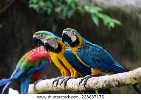 Lovely macaws on the branch