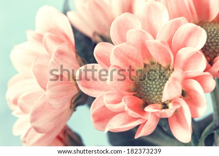 lovely pale pink flowers in vintage style - stock photo
