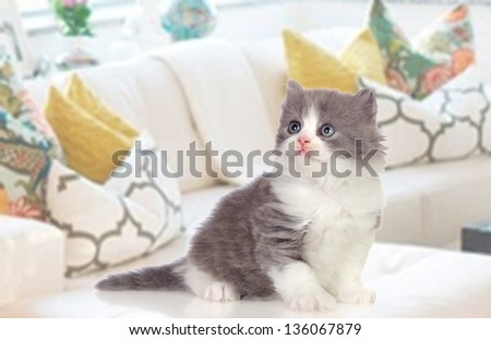 Lovely Persian kitten sitting on the couch at home - stock photo