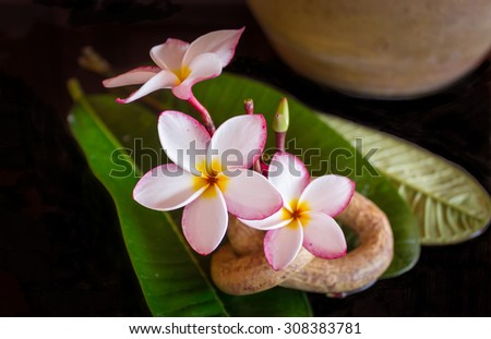 lovely pink flower plumeria or frangipani with leaf decorated with boutique or vintage background  - stock photo