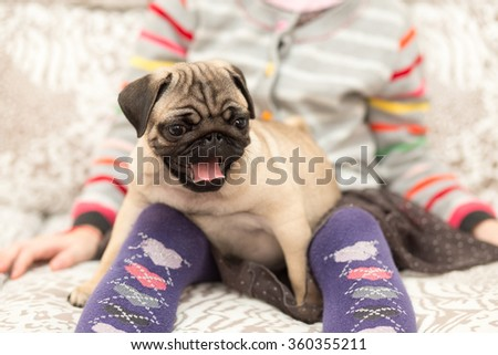 Lovely pug puppy playing with a girl - stock photo