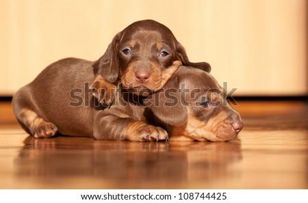 lovely puppies under sunlight - stock photo