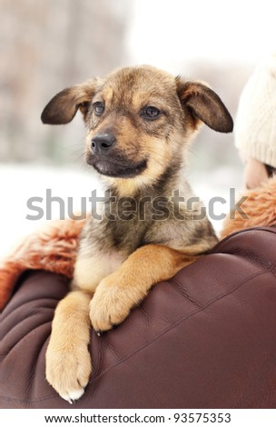Lovely puppy - stock photo